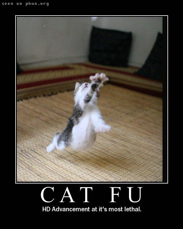 Keyboard cat has nothing on me I tell ya. Nothing.
